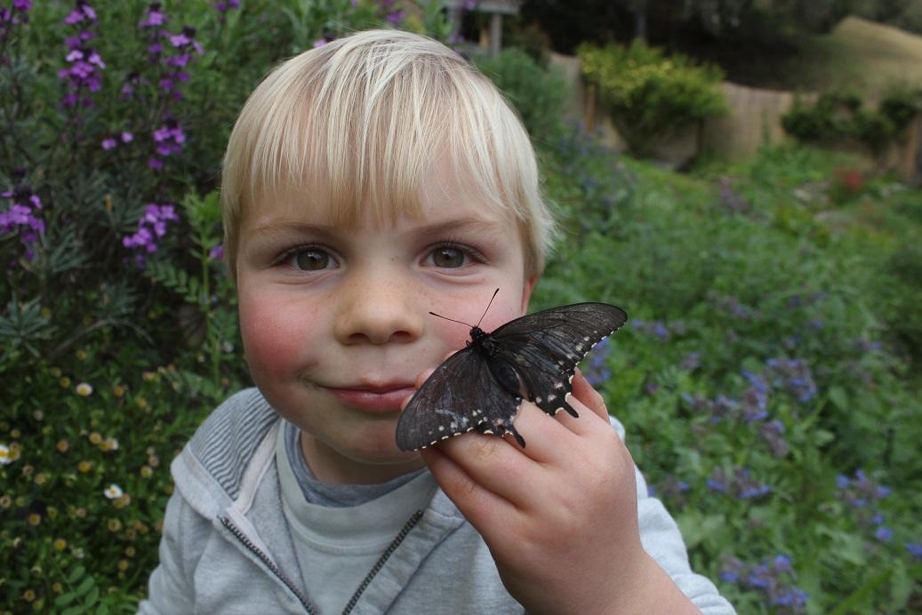 zac_butterfly